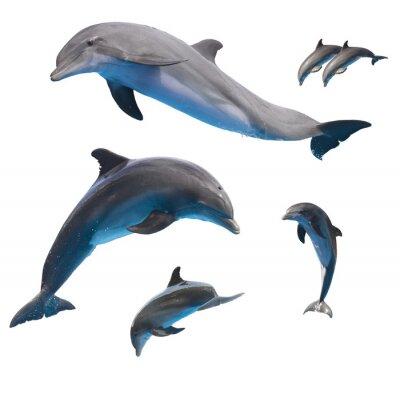 Fotomural saltando delfines en blanco