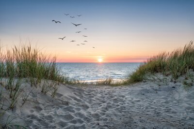 Fotomural Sand dunes on the beach at sunset