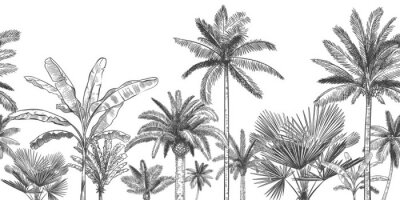 Fotomural Seamless horizontal tropical background. Hand drawn palm trees, sketch exotic tropic jungle leaves and paradise palm tree vector wallpaper illustration. Exotic palm tree botanical, rainforest foliage