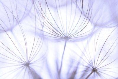 Fotomural semillas de diente de león