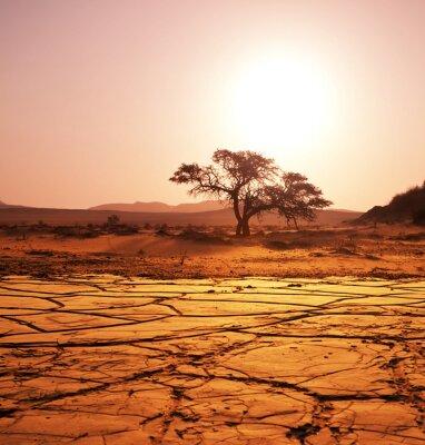 Fotomural Sequía