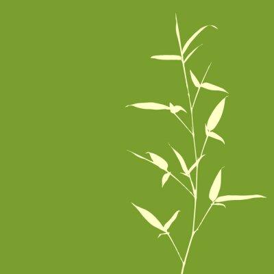 Fotomural Silueta de bambú sobre fondo verde