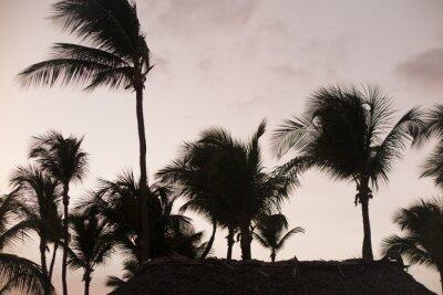 Fotomural Silueta de palmeras en la puesta del sol hermosa