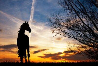 Fotomural Silueta del caballo en la puesta del sol