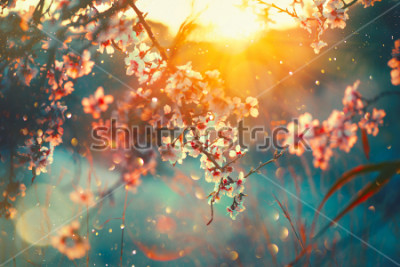 Fotomural Spring blossom background. Beautiful nature scene with blooming tree and sun flare. Sunny day. Spring flowers. Beautiful Orchard. Abstract blurred background. Springtime