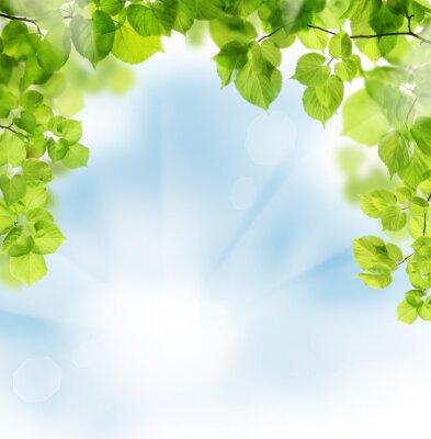 Fotomural Summer hojas sobre fondo floral verde