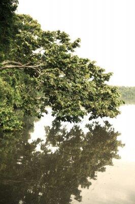 Fotomural Tambopata, provincia, al aire libre