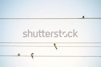 Fotomural Tetas de pájaros sentados en alambres fondo minimalista primavera