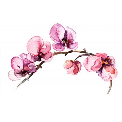 Fotomural the watercolor flowers orchid isolated on the white background