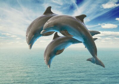 Fotomural three  jumping dolphins