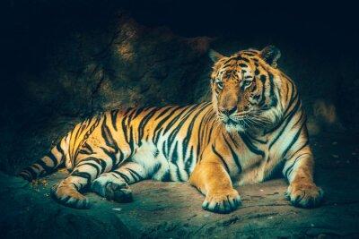 Fotomural Tigre con el fondo de piedra de la montaña en sombrío sombrío majestuoso peligroso, efecto de color de sensación de miedo.