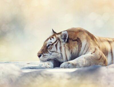 Fotomural Tigre descansando sobre una roca
