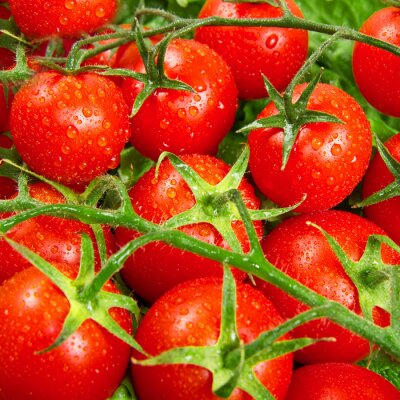 Fotomural tomates rojos