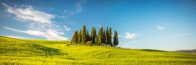 Fotomural Toscana en la primavera