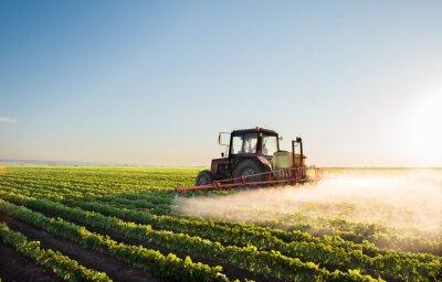 Fotomural Tractor pulverizando el campo de soja
