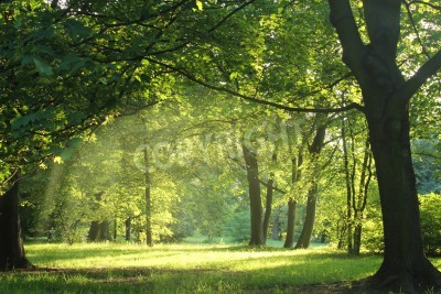 Fotomural trees in a summer forest