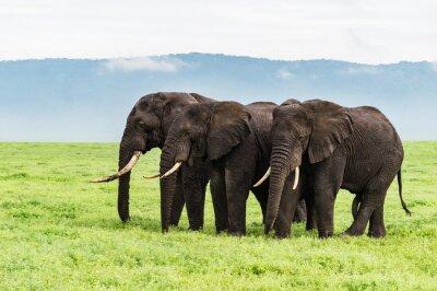 Fotomural Tres elefantes de pie en una fila en el piso del cráter de Ngorongora