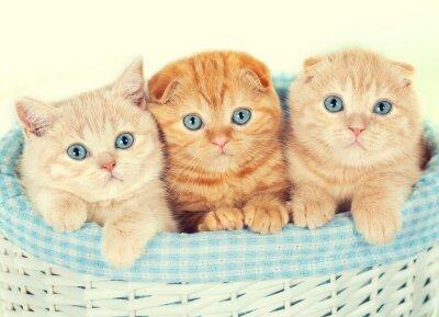 Fotomural Tres pequeños gatitos en la canasta