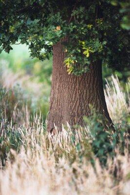 Fotomural Tronco de árbol entre la hierba amarilla alta.