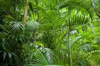 Fotomural Tropical exuberante verde palmera selva de fondo