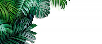 Fotomural Tropical leaves banner on white background with copy space