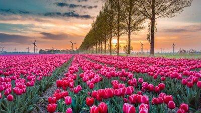 Fotomural tulipán al atardecer 05