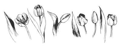 Fotomural tulipán flor ilustración gráfica naturaleza decorativa arte