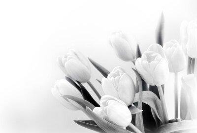 Fotomural Tulipanes blancos sobre fondo blanco bw
