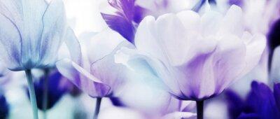 Fotomural tulipanes cyan violet ultra light
