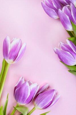 Fotomural Tulipanes púrpuras sobre fondo rosa