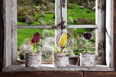 Fotomural Tulpen am Fenster con el Blick en la Landschaft