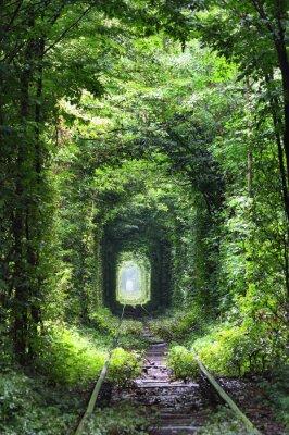 Fotomural Túnel del amor