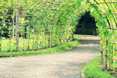 Fotomural Túnel del árbol de la planta de Luffa en ángulo