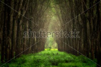 Fotomural Túnel del árbol imaginario Hermosa fantasía del bosque de la naturaleza.