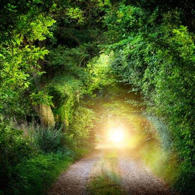 Fotomural Tunnel aus Bäumen führt ins Licht