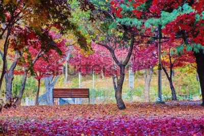 Fotomural Un banco en un parque con muchas hojas del árbol de arce rojo. Lugar pacífico.