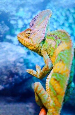 Fotomural Un camaleón verde