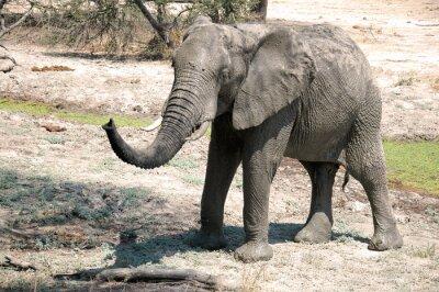Fotomural Un elefante en la sabana - Tanzania - África