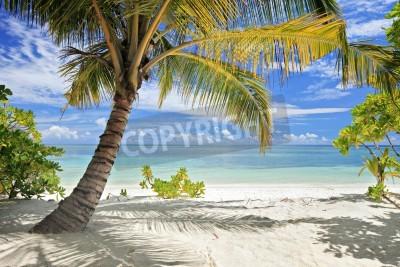 Fotomural Una escena de palmeras y playa de arena en la isla de Maldivas