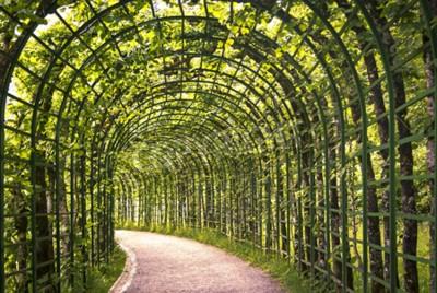 Fotomural Una hermosa arcada verde en el parque con un camino.