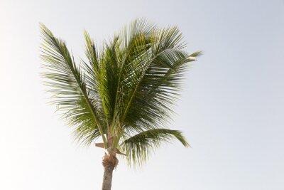 Fotomural Una palmera de coco y cielo azul