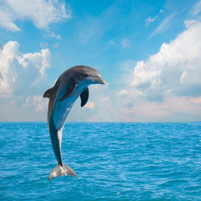 Fotomural uno delfines saltarines