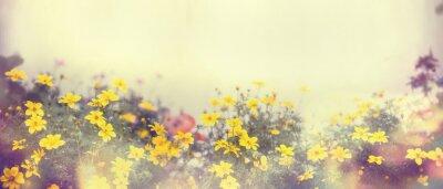Fotomural Varias flores de primavera de colores en la luz del sol, desenfoque, banner para el sitio web, la frontera