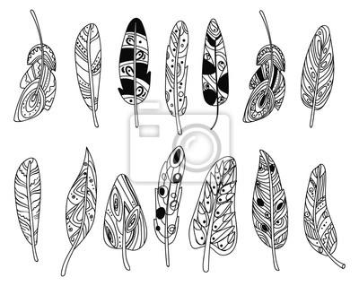 Vector Conjunto De Plumas Estilizadas De Aves Colección De Plumas