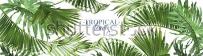 Fotomural Vector las banderas tropicales horizontales de las hojas en el fondo blanco. Diseño botánico exótico para cosméticos, spa, perfumes, productos para el cuidado de la salud, aroma, invitación de boda. M