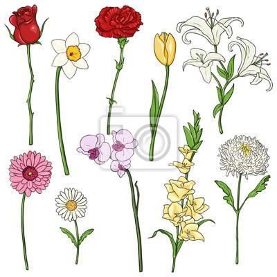 Vector Set De Colores Flores De Dibujos Animados Fotomural