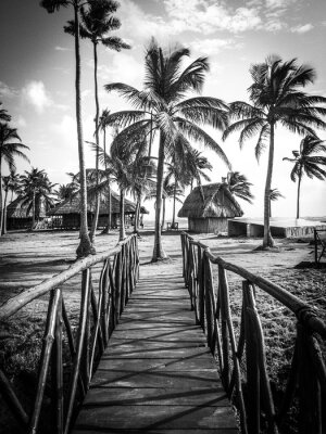 Fotomural Vida en la isla