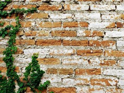 Fotomural Vieja pared de ladrillo con enredadera