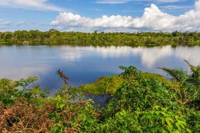 Fotomural Vista del lago en la selva amazónica, Manaos, Brasil