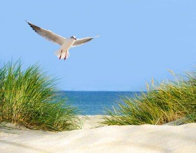 Fotomural Vistas Dune, gaviota y mar
